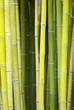 bambous verts