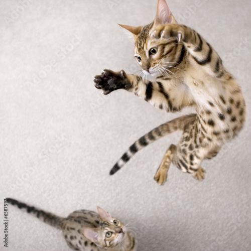 Foto op Canvas Kat Jumping cat