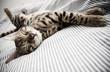 roleta: cat asleep