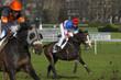 horse racing auteuil 06