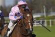 horse racing auteuil 04