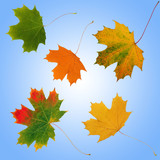 Seasonal Leaves poster