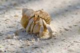 Amusing hermit crab poster