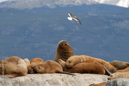 Relaxing sealions and seagull.