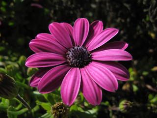 Flor lila 2
