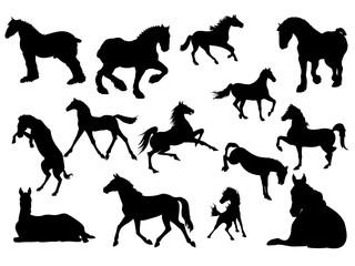 silhueta de cavalos, vector, illustração