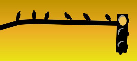 Pájaros sobre un semáforo
