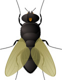 Illustration of everyones favorite insect the fly poster