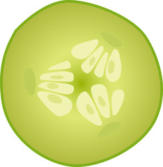 slice cucumber vector