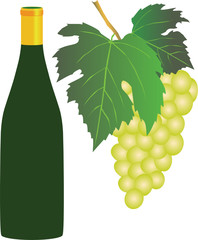 white grapes and a bottle of white wine on white background