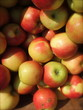 Closeup of Harvest Fresh Organic Orchard Apples in Wooden Crate