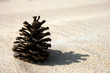 Pinecone in the Sand - Beach