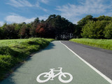 Scenic cycle track in Phoenix Park in Dublin  poster