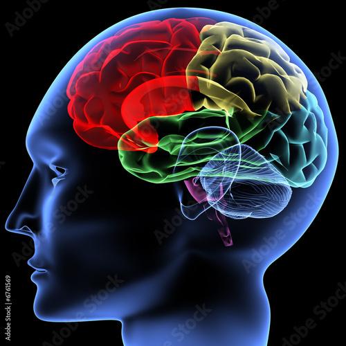 Leinwandbild Motiv Brain