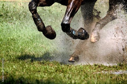 Leinwandbild Motiv Horsepower 2
