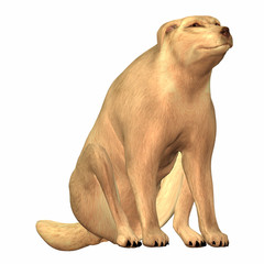 Illustration of a domestic dog sitted on a white background