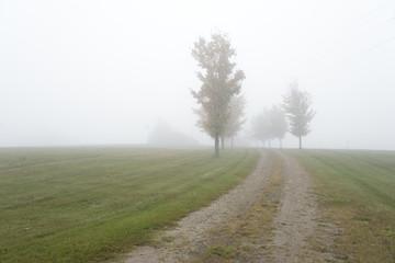 Foggy pathway amid a grassland.