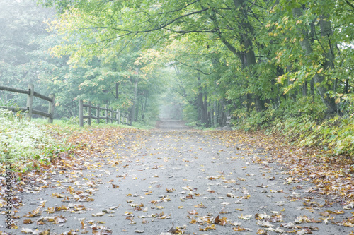 Dried leaves on a vacant road.