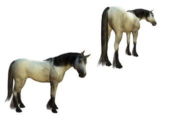 Cavallo 01