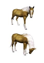 Cavallo 03