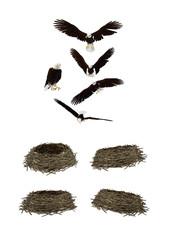 Aquila con nido