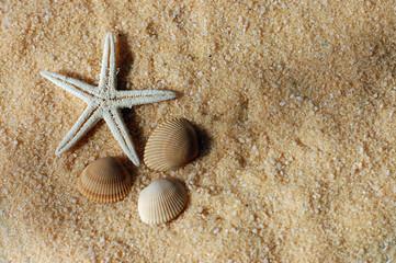 Starfish and Seashells