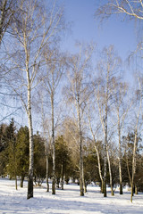 winter public garden