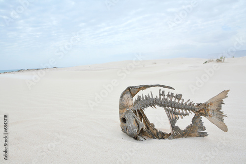 Skeleton of a fish in the desert