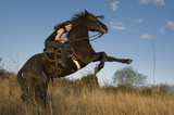 rearing stallion and girl poster