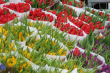 Tulips in a flowermarket