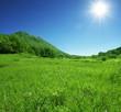 roleta: Green hills