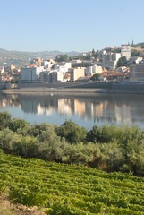 Douro Vinhateiro - Régua