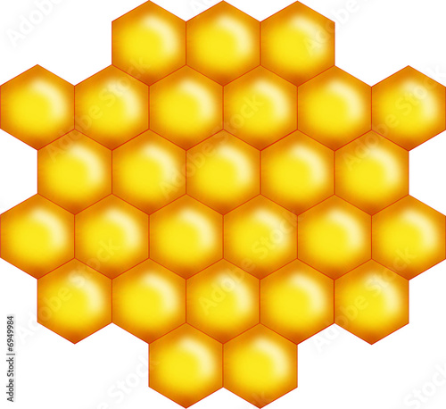 little honey bee comb