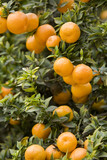 Orange Grove 5 poster