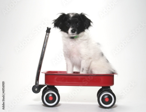 PUPPY IN RED WAGON