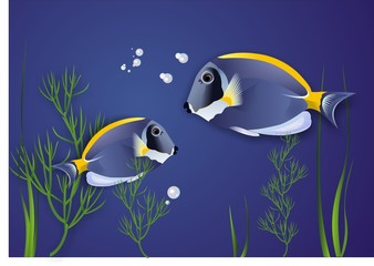 Surgeonfish. Vector. Illustration
