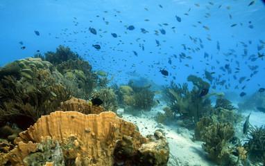 Coral reef scene