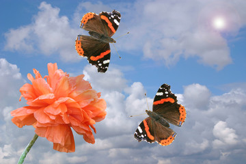 Red poppy and butterflies on a background of the cloudy sky.