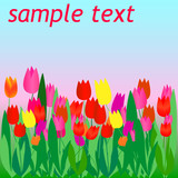 Flyer with color vector tulips poster