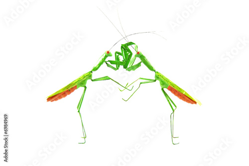praying mantis vs praying mantis 1c