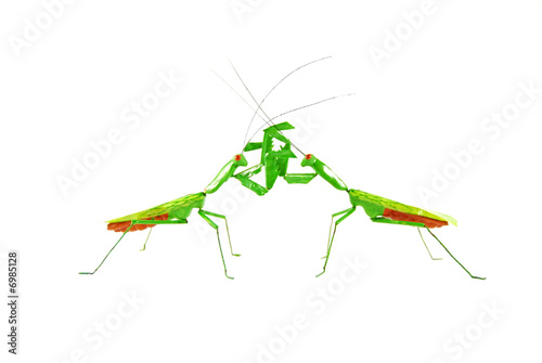 praying mantis vs praying mantis 1e