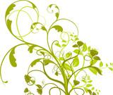 Fototapety  vecteur série - plante à fleurs isolé sur fond blanc