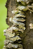 Fungus on Tree Stump 4 poster