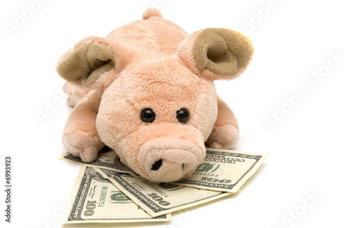 pig and money