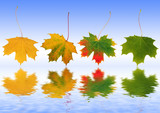 Autumn Leaves Reflected poster