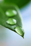 Fototapety Green leaf with water drops