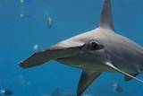 Fototapete Australien - Hintergrund - Fische