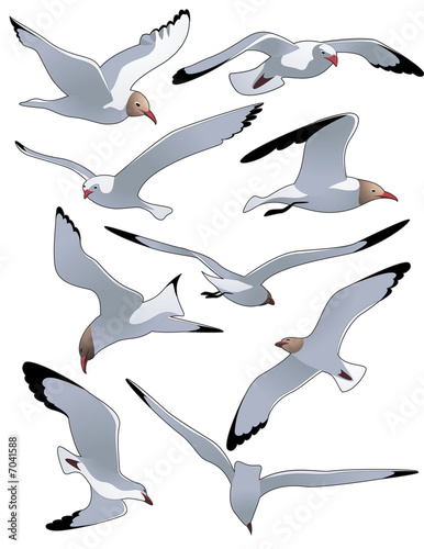 canvas print picture Sea_gulls