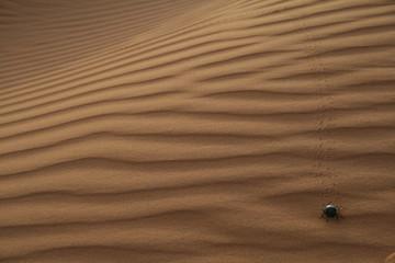 Scarafaggio nel deserto 02