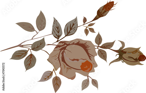 illustration with orange rose
